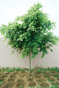 Tree in gardenの写真素材 [FYI04320392]