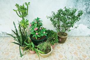 Potted plantsの写真素材 [FYI04320393]