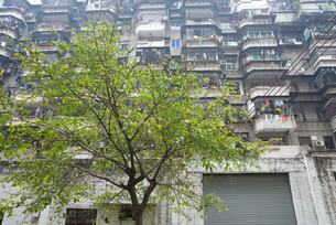 Apartment building and treeの写真素材 [FYI04320406]