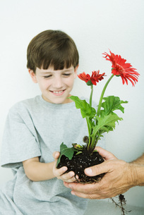 Boy taking flower from man's handsの写真素材 [FYI04320843]