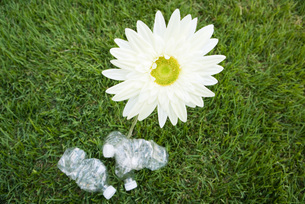 Flower and discarded water bottlesの写真素材 [FYI04320866]