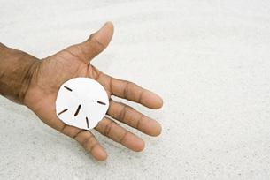 Hand holding sand dollarの写真素材 [FYI04320905]