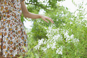 Woman touching wildflowers, mid sectionの写真素材 [FYI04321931]