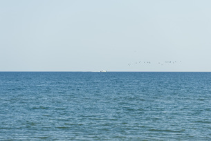 Seascape, boat and birds in visible in the distanceの写真素材 [FYI04322471]