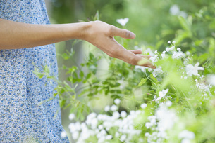 Woman's hand touching wildflowers, mid sectionの写真素材 [FYI04322620]