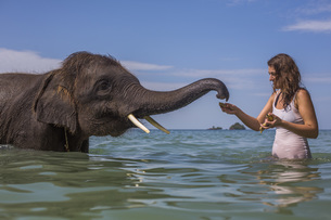 Mid adult woman feeding elephant in waterの写真素材 [FYI04322725]