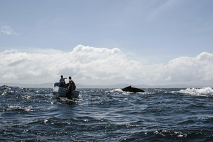 Men in boat watching whale swimming in seaの写真素材 [FYI04322742]