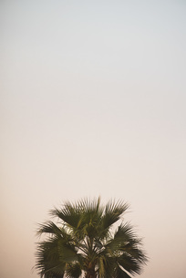 High section of palm tree against clear sky at duskの写真素材 [FYI04322790]