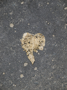 Directly above shot of dry leaf on roadの写真素材 [FYI04322794]