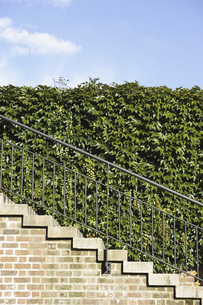 Railing on steps against ivy covered wallの写真素材 [FYI04322798]