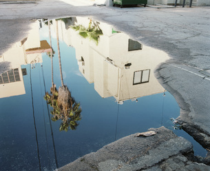 High angle view of palm tree and buildings reflecting in puddleの写真素材 [FYI04322890]