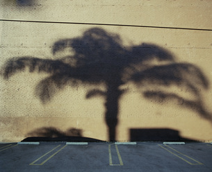 Shadow of palm tree on wall in parking lotの写真素材 [FYI04322897]