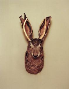 Jackalope hunting trophy mounted on wallの写真素材 [FYI04322898]