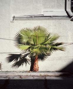 Small palm tree on sidewalk outside buildingの写真素材 [FYI04322901]