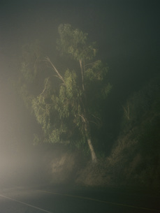 Tree by road side on foggy nightの写真素材 [FYI04322904]