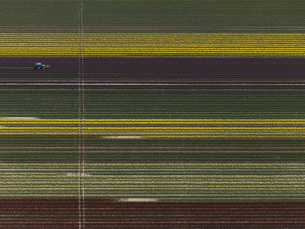 Aerial view of various crops in agricultural field, Stuttgart, Baden-Wuerttemberg, Germanyの写真素材 [FYI04322906]