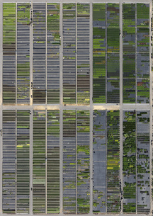Full frame shot of crop fields in landscape, Hohenheim, Stuttgart, Baden-Wuerttemberg, Germanyの写真素材 [FYI04322916]