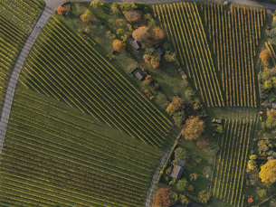 Full frame shot of vineyards in landscape during autumn, Stuttgart, Baden-Wuerttemberg, Germanyの写真素材 [FYI04322921]
