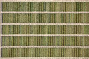 Full frame shot of agricultural field, Hohenheim, Stuttgart, Baden-Wuerttemberg, Germanyの写真素材 [FYI04322923]