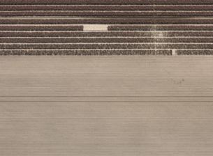 Full frame shot of agricultural landscapeの写真素材 [FYI04322924]