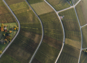 Full frame shot of vineyards in landscape during autumn, Stuttgart, Baden-Wuerttemberg, Germanyの写真素材 [FYI04322928]