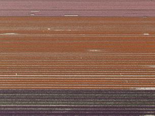 Full frame shot of crops in agricultural landscape, Stuttgart, Baden-Wuerttemberg, Germanyの写真素材 [FYI04322934]