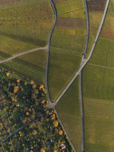 Aerial view of crops in agricultural field during autumn, Stuttgart, Baden-Wuerttemberg, Germanyの写真素材 [FYI04322939]