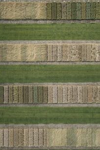 Full frame aerial view of crops in agricultural landscape, Stuttgart, Baden-Wuerttemberg, Germanyの写真素材 [FYI04322949]