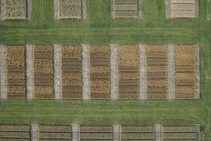 Full frame aerial view of crops in agricultural landscape, Stuttgart, Baden-Wuerttemberg, Germanyの写真素材 [FYI04322955]