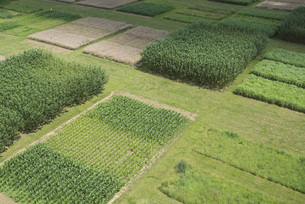 High angle view of agricultural field, Stuttgart, Baden-Wuerttemberg, Germanyの写真素材 [FYI04322959]