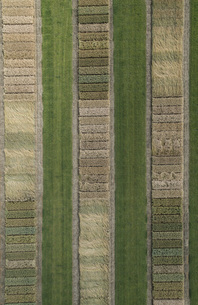 Full frame aerial view of crops in agricultural landscape, Stuttgart, Baden-Wuerttemberg, Germanyの写真素材 [FYI04322960]