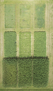 Full frame aerial view of crops in agricultural landscape, Stuttgart, Baden-Wuerttemberg, Germanyの写真素材 [FYI04322962]