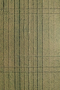 Full frame aerial view of crops in agricultural landscape, Stuttgart, Baden-Wuerttemberg, Germanyの写真素材 [FYI04322964]