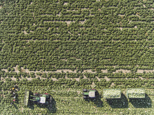Directly above view of tractors and trailers of cabbage in field, St. Poelten, Austriaの写真素材 [FYI04322978]