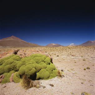 Idyllic shot of desert landscape against clear blue sky on sunny day, Altiplano, Boliviaの写真素材 [FYI04323042]