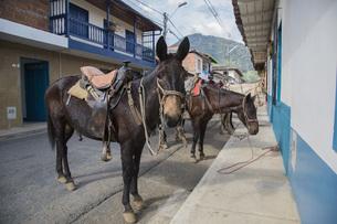 Horses on road in townの写真素材 [FYI04323098]