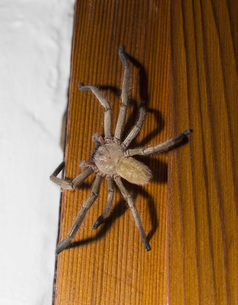 Close-up of spider on woodの写真素材 [FYI04323118]