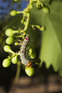 Close-up of caterpillar on plantの写真素材 [FYI04323119]