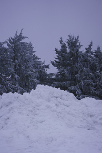 Low angle view of trees in snow covered land against clear skyの写真素材 [FYI04323149]