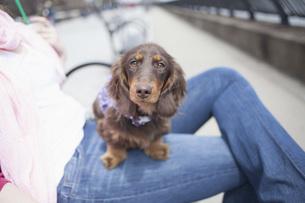 Portrait of dachshund sitting on woman's lap at sidewalkの写真素材 [FYI04323177]