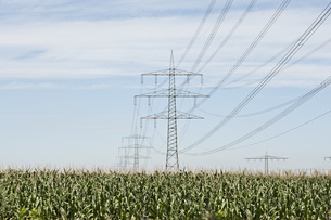 Corn field and electricity pylons against skyの写真素材 [FYI04323228]