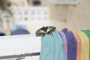 Close-up of butterfly on towel during sunny dayの写真素材 [FYI04323242]