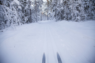 View of skis in snow covered landscape in forestの写真素材 [FYI04323250]