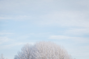 High section of snow covered trees against skyの写真素材 [FYI04323265]