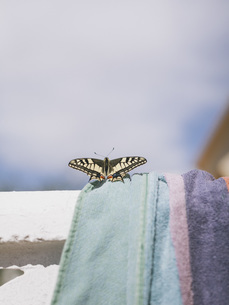 Close-up of butterfly on towel during sunny day against skyの写真素材 [FYI04323273]