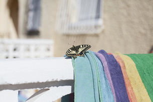 Close-up of butterfly on towel during sunny dayの写真素材 [FYI04323287]