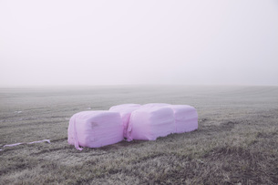 Wrapped hay bales in field on foggy dayの写真素材 [FYI04323336]