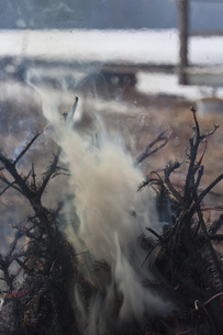 Smoke emitting from burnt branchesの写真素材 [FYI04323344]