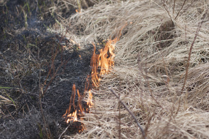 High angle view of burning dry grassの写真素材 [FYI04323354]