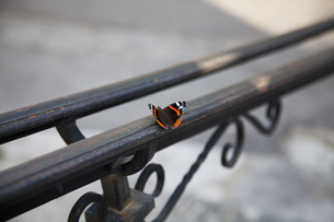 Close-up of butterfly on metal railingの写真素材 [FYI04323364]